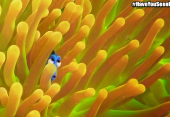 splash-findingdory